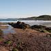 Coldingham Bay_2