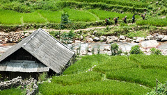 Sapa, Vietnam (tom.frohnhofer) Tags: rice terrace vietnam fields farms sapa hmong natives indegenous