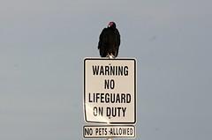 He's no lifeguard or pet. (Treesha Duncan) Tags: summer pet bird nature sign photography lifeguard buzzard lakenasworthy sonya550