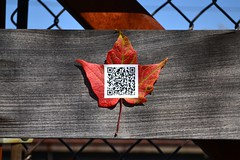 Sonnet 73, 04 (oschene) Tags: williamshakespeare qrcode northamptonma sonnet73 digitalgraffiti
