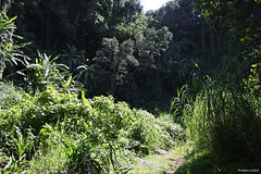 Paradis vert (philippeguillot21) Tags: verdure braslong entredeux reunion outremer france indianocean africa pixelistes canon