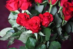 DSC_4718 (PeaTJay) Tags: nikond750 reading lowerearley berkshire macro micro closeups gardens indoors nature flora fauna plants flowers bouquet rose roses rosebuds