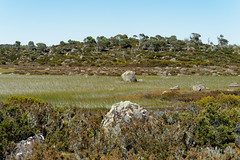 20170302-17-Reeds in lake (Roger T Wong) Tags: australia centralplateauconservationarea greatpinetier sel70300g sony70300 sonya7ii sonyalpha7ii sonyfe70300mmf2556goss sonyilce7m2 tasmania wha worldheritagearea bushwalk camp centralhighlands hike marsh trektramp walk