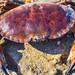 Krabbe am Strand - Crab on the beach