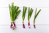 Fresh Red spring onions scallions (John. Blakey) Tags: ifttt 500px fresh isolated green healthy eat fruit garlic onion organic leek spring onions springonion springonions