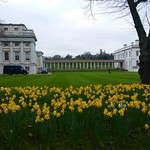 Daffodils In Front Of Queen's House thumbnail