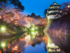 Spring Evening (marco ferrarin) Tags: cherryblossom spring flower pink moat hirosaki japan bluehour donjon castle bridge longexposure evening 春宵一刻値千金 桜 花見 弘前 青森 春 park nature color sakura 弘前城