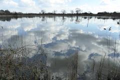 wolken in den viswijer (erix!) Tags: zonhoven vlaanderen flandern natuurlijk natuur nature water fluid lakes