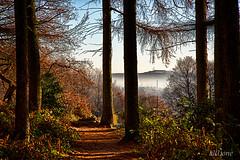 New Dawning (al(l)one) Tags: wood tree trees fog mist morning woods fall autumn woodland path leaves