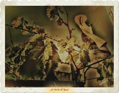 La Vid en el Tejado (csgranell) Tags: parra vid ocre csgranell 2017 ediciónfotográfica chimenea veleta terraza tejado cielo rojo planta tendedero texturas texturado