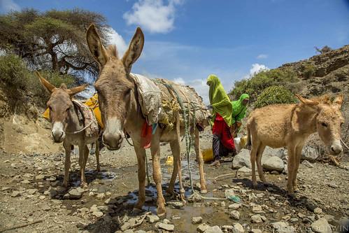 Somaliland_Mar17_3363 (1)