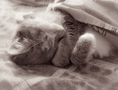 Daisy the cat (Podsville) Tags: daisythecat cat mammal
