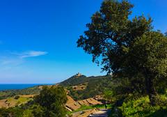 Vineyards walk in the Spring. Collioure. France South (JRJ.) Tags: frankrike france visitfrance nature fantastic vinyards bluesky mediterranian