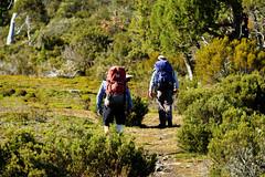 20170302-13-Walking out in morning light (Roger T Wong) Tags: australia greatpinetier np nationalpark sel70300g sony70300 sonya7ii sonyalpha7ii sonyfe70300mmf2556goss sonyilce7m2 tasmania wha wallsofjerusalem worldheritagearea bushwalk camp hike morning trektramp walk