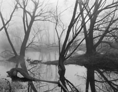Vistula Lanscape Park, Dragacz (Other dreams) Tags: pentax 6x7 fp4 paranols vistula landscape park oxbow lake analog fog dragacz film ilford march trees