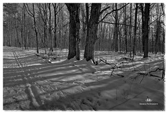 FEBRUARY 2017-020668-22 (Nick and Karen Munroe) Tags: sunset settingsun snow trees shadows trail hiking hike winter landscape landscapes hiltonfalls hiltonfallsconservationarea haltonhills milton ontario canada outdoors beauty beautiful blackandwhite blackwhite bw bandw monochrome nikon nickandkarenmunroe nickmunroe nature nikond750 nickandkaren karenick23 karenick karenandnickmunroe karenmunroe karenandnick munroedesignsphotography munroedesigns munroephotography munroe nikon2470f28 winterwonderland wintry snowy