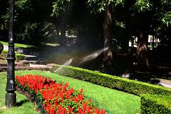Campo de San Francisco (Jusotil_1943) Tags: imagines riego regando parque oviedo flroes rojas setos hedges