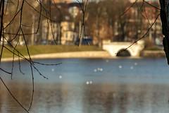Вид на Верхнее озеро (klgfinn) Tags: architecture bokeh branch bridge grass lake landscape oberteich reflection shore spring tree water архитектура берег боке весна ветви ветка веткадерева вода дерево мост озеро отражение пейзаж трава