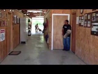 How Family Protection Dogs evelate Home Security | K9 XARO training in Florida