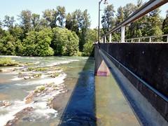 Autzen Foot Bridge (LarrynJill) Tags: bridge green oregon river eugene willametteriver willamette autzen autzenfootbridge
