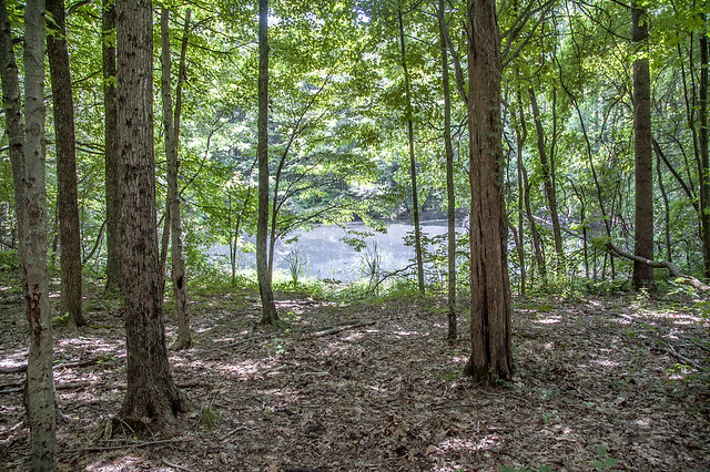 Hoosier National Forest - Lick Creek Trail - June 17, 2014