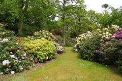 Exbury Gardens (gmj49) Tags: new gardens forest sony hampshire exbury gmj a350