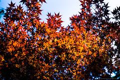 2014_06_01_TodorokiKeikoku_select_017_HD (Nigal Raymond) Tags: japan tokyo    todorokikeikoku  setagayaku todorokivalley  2470mmf28 nigalraymond wwwnigalraymondcom canon5d3 20140601 todorokoravinepark