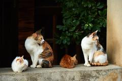 Pricked Up (rampx) Tags: family up japan cat ginger day fine kittens calico yamaguchi neko    pricked nagatoshi
