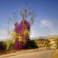 Sicily 2014 514