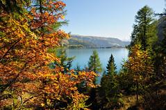 Lac de Tseuzier in autumn - Switzerland (PascalBo) Tags: autumn mountain alps fall nature montagne alpes automne landscape outdoors schweiz switzerland nikon europe suisse paysage wallis valais d300 lacdetseuzier pascalboegli