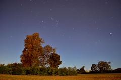 Noche (alejandra lagos) Tags: naturaleza noche estrellas temuco