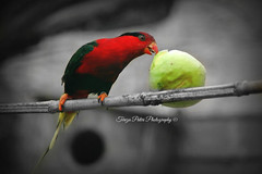 Snack Time (Terezaki ✈) Tags: travel light red summer bird apple nature colors photography photo nikon day searchthebest d70 hellas parrot greece pictureperfect naturesfinest anawesomeshot flickrdiamond theperfectphotographer natureselegantshots