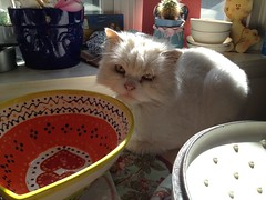 Henry resting (Pink Knitter) Tags: cat hearts bowl henry mylove