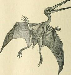 Anglų lietuvių žodynas. Žodis pterocarp reiškia pterokarpas lietuviškai.