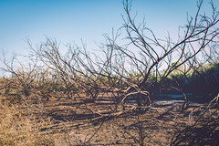 Burned (Adam Yurkunas) Tags: park canon fire nevada wetlands henderson remains 70d