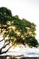 /bərst/ (IanLudwig) Tags: canon photography hawaii ii lee kauai hawaiian beaches usm wailua tog togs 2470mm lydgate gnd f28l hawaiibeaches leefilters niksoftware hawaiiphotos vsco cep4 redcanon canon5dmkiii hawaiianphotography 5dmkiii rgnd canon5dmarkiii ianludwig lee4x4cpl leefilterfoundation lightroom5 darylbensonnd3reversegradualneutraldensity canon2470mmf28lusmii adobephotoshopcc