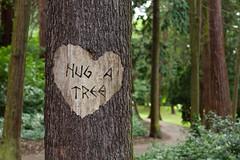tree carving (Leo Reynolds) Tags: webthing photofunia xleol30x xxx2014xxx