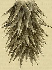 Anglų lietuvių žodynas. Žodis pygal reiškia <li>pygal</li> lietuviškai.