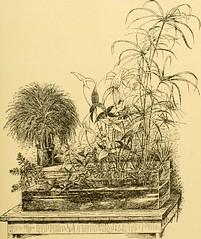 Anglų lietuvių žodynas. Žodis chameleon tree frog reiškia chameleonas medvarlės lietuviškai.