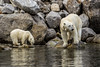 """59 Raudfjorden, Svalbard 2014 • <a style=""""font-size:0.8em;"""" href=""""http://www.flickr.com/photos/36838853@N03/14919952100/"""" target=""""_blank"""">View on Flickr</a>"""
