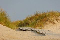 zum Meer (Don Bello - Photography) Tags: meer schweden ostsee dne sandhammaren weg stersjn 1000views sterlen abendstimmung abendlicht scandinavien lumixphotographer donbello panasonicphotographer ostseesand panasonicfz150 lumixfz150 sommer2014 acdseepro7 reinhardbellmann donbellophotography