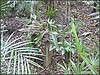 3232080753_e10ebe55a8_o (gray.florie) Tags: allrightsreserved usewithoutpermissionisillegal ©2009florencetomasulogray florencegray floriegrayflorencetomasulograytomasulofloriegrayfloriegraycom