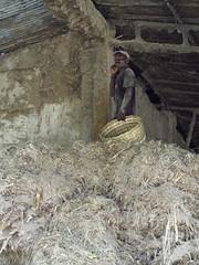 057 (alexandre.vingtier) Tags: haiti rum caphaitien nazon clairin rhumagricole distillerielarue