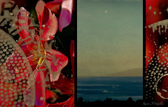 Moon over Maui (Karen McQuilkin) Tags: flowers hawaii layers moonovermaui owntexture theawardtree karenmcquilkin