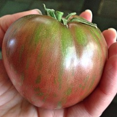 "The first ripe Pink Berkeley Heirloom Tomato of the season found its way to our lunch plates today. This tomato was as delicious as it was beautiful. It was full of old fashioned tomato flavor. What a treat!  Do you have a favorite variety of slicing toma • <a style=""font-size:0.8em;"" href=""http://www.flickr.com/photos/54958436@N05/15108161775/"" target=""_blank"">View on Flickr</a>"