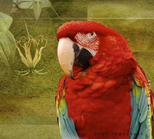 MaCaw and flowers