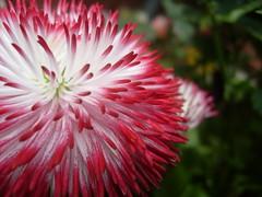 Pausa (0_Detalles_0) Tags: flores color luz texturas suaves
