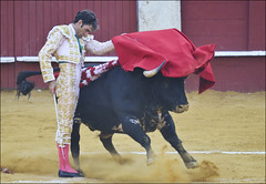 Jose Tomas 0230 (likamccuntz) Tags: feria bullfight malaga malagueta matador tauromaquia corridadetoros josetomas