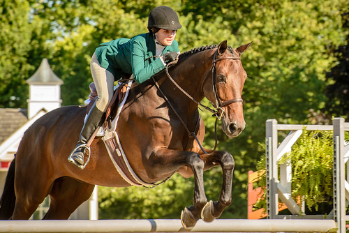 horse jumping competition lamplightequestrian fall2014