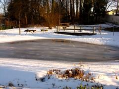 IMG_3921 b Dezember (Traud) Tags: schnee winter snow pool germany garden bayern deutschland bavaria teich eis garten serie steg laufen salzach naturschutzakademie